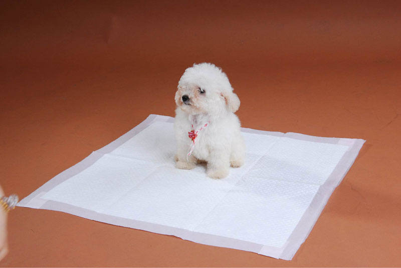 Pet Pads Non Wovens Fabrics Supplier